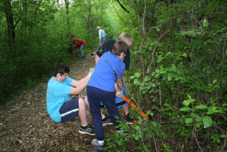 H. B. Fuller Nature preserve students work on pulling out invasive buck-thorn trees.