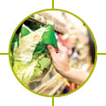 Image of hand taking bag of lettuce
